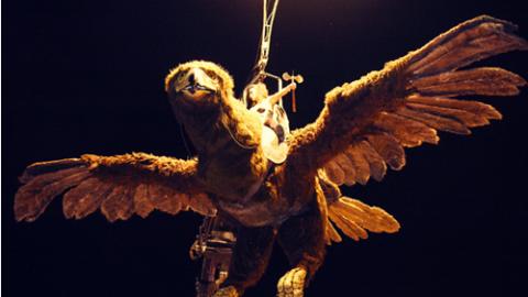 Águila Sofía (1)