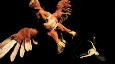 Águila Sofía (11)
