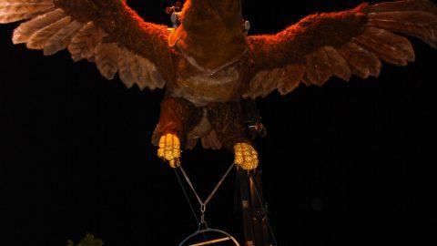 Águila Sofía (3)