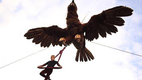 Águila Sofía (7)