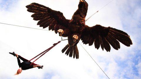 Águila Sofía (8)