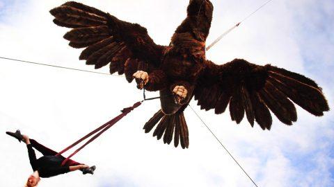 Águila SofíaOK
