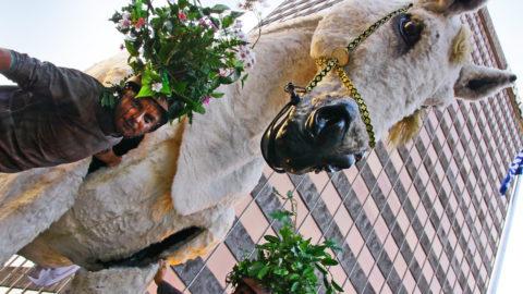 caballo-real-en-el-bosque-bilbao-3_9721881298_o
