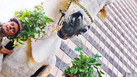 caballo-real-en-el-bosque-bilbao-4_9718647043_o
