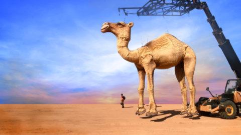 camella-raoula